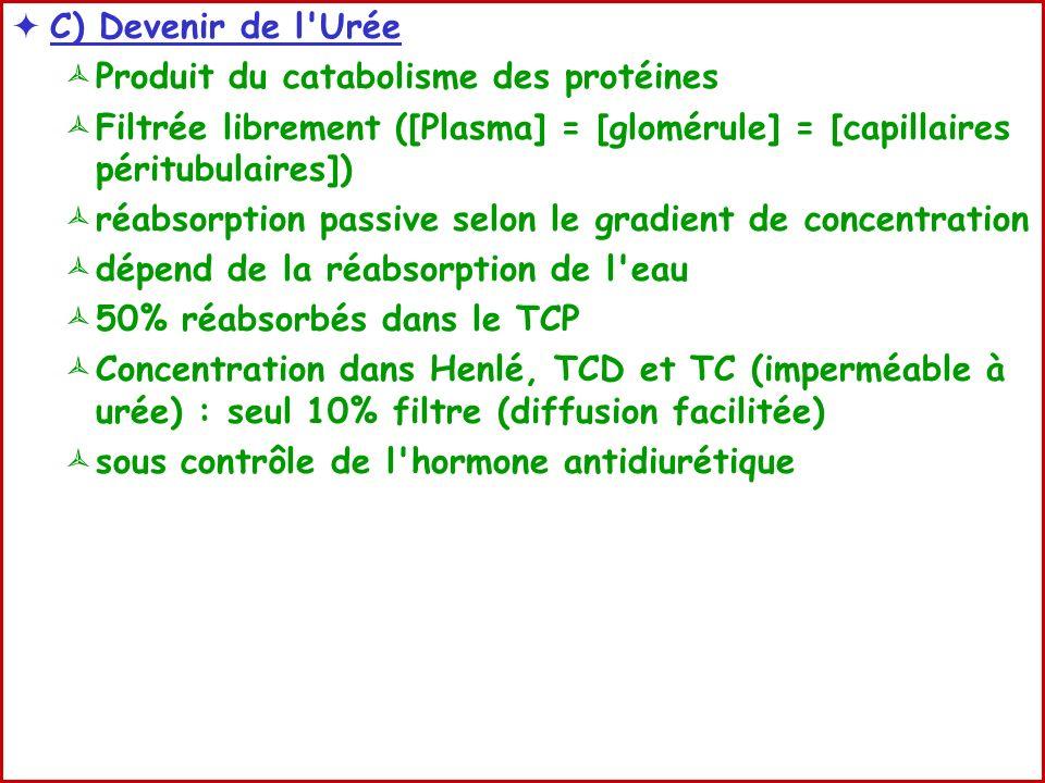 C) Devenir de l Urée Produit du catabolisme des protéines. Filtrée librement ([Plasma] = [glomérule] = [capillaires péritubulaires])